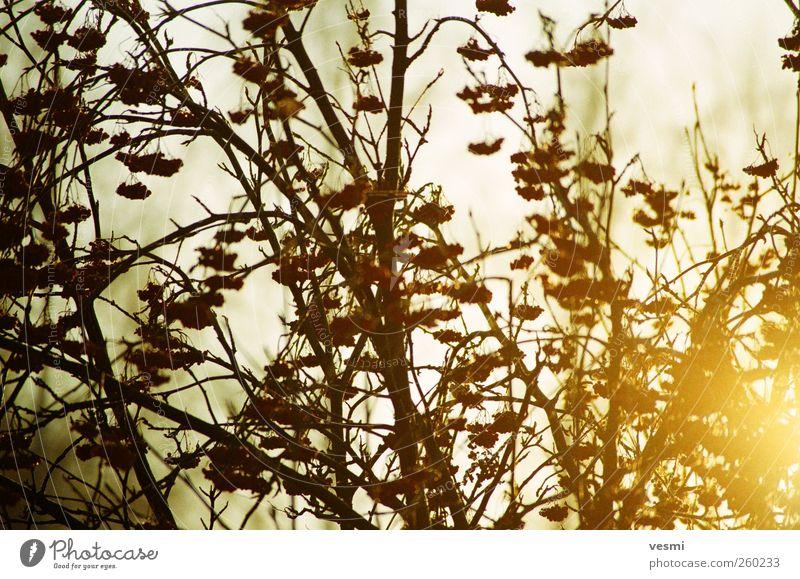 Natur schön Baum Pflanze Sonne Winter Freude gelb Erholung Umwelt Herbst Holz Garten braun Eis Tourismus