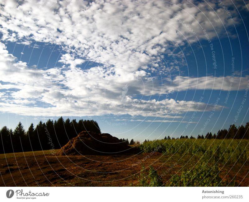 Häufchen Himmel Natur blau weiß grün Baum Pflanze Sommer Wolken Wald Umwelt Wiese Landschaft Gras Wärme Luft