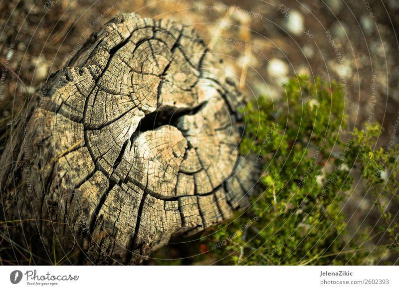Nahaufnahme des alten Stumpfes Umwelt Natur Landschaft Pflanze Baum Gras Park Wald Holz groß natürlich braun grün Hintergrund Konsistenz geschnitten kreisen