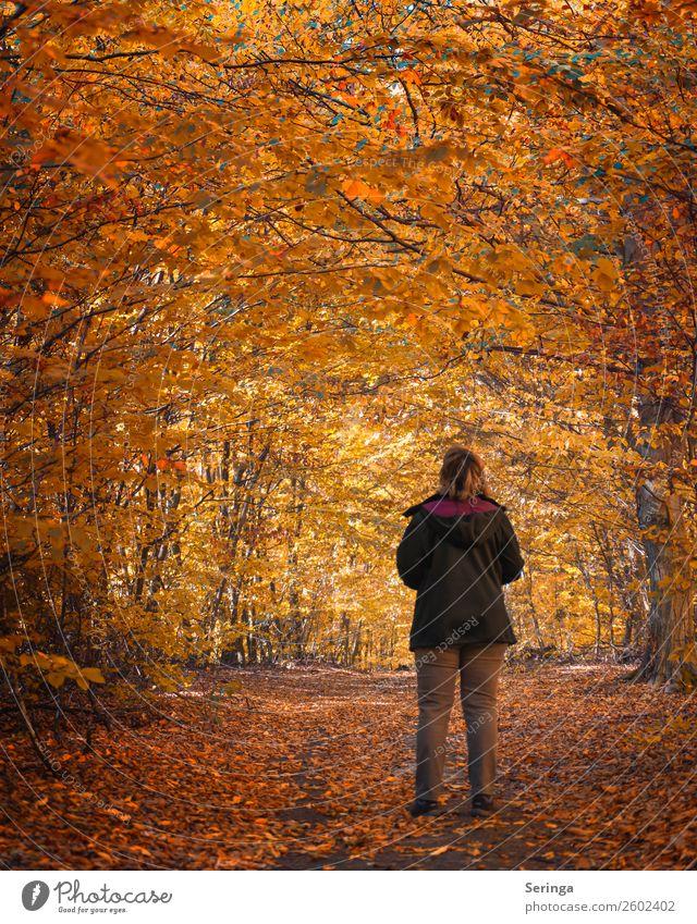 Herbstspaziergang Umwelt Natur Landschaft Pflanze Tier Baum Blatt Wald Blick herbstlich schön Schönes Wetter Herbstlaub Herbstfärbung Herbstwald Herbstwetter
