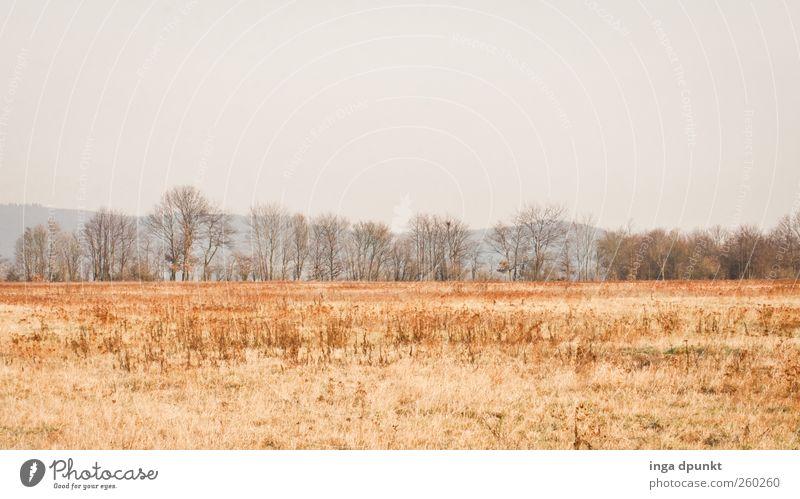 Ebene Umwelt Natur Landschaft Himmel Wolkenloser Himmel Winter Klima Wetter Pflanze Baum Gras Nutzpflanze Feld Felsplateau Brachland Ackerbrache kalt Stimmung
