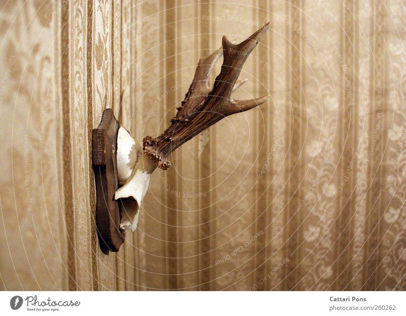an der Wand Tier Tod Wildtier Kitsch Jagd Tapete Horn hängen Hirsche Siebziger Jahre altehrwürdig Reh Skelett Tierschädel Tapetenmuster Trophäe
