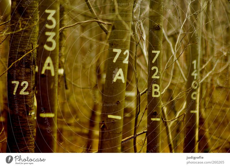 Baumzählung Umwelt Natur Landschaft Pflanze Wald Wachstum natürlich Ordnung Umweltschutz zählen Statistik baumbestand Laubwald Ziffern & Zahlen Buchstaben