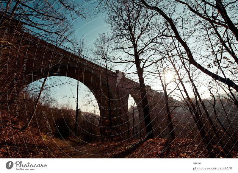 Brücke* Himmel Natur Baum Einsamkeit Landschaft dunkel Wald Umwelt Herbst Wege & Pfade Stimmung Wetter Klima Schönes Wetter Fußweg