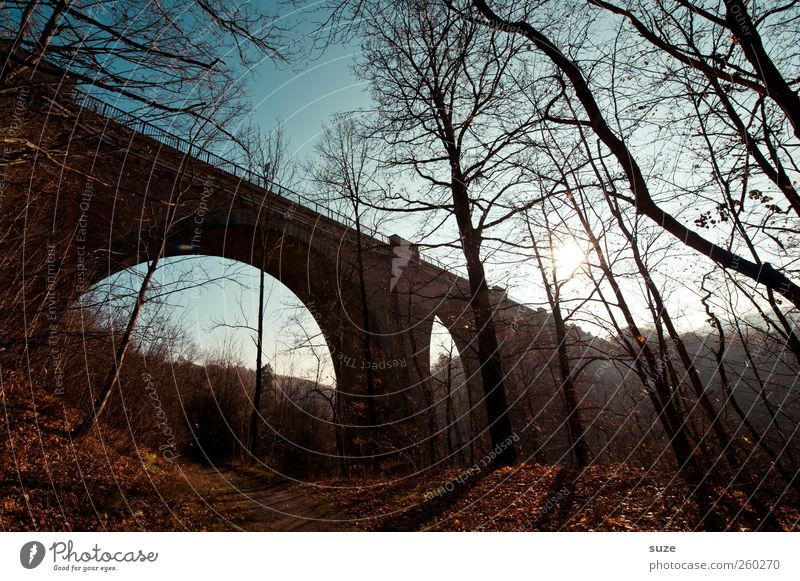 Brücke* Umwelt Natur Landschaft Himmel Herbst Klima Wetter Schönes Wetter Baum Wald Bauwerk Sehenswürdigkeit Wahrzeichen Wege & Pfade dunkel Stimmung Einsamkeit