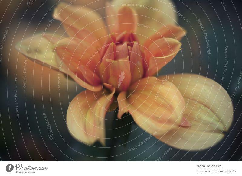 Gemälde Umwelt Natur Pflanze Frühling Sommer Blume Tulpe Blüte atmen Blühend träumen Wachstum ästhetisch exotisch fantastisch Fröhlichkeit schön gelb rot