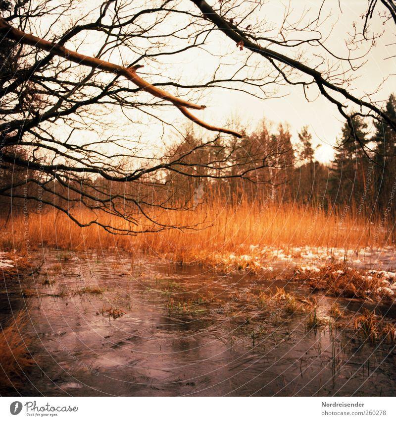 Brennendes Eis Sinnesorgane ruhig Ausflug Freiheit Winter Natur Landschaft Pflanze Klima Frost Schnee Baum Wald Seeufer Moor Sumpf leuchten träumen Farbe