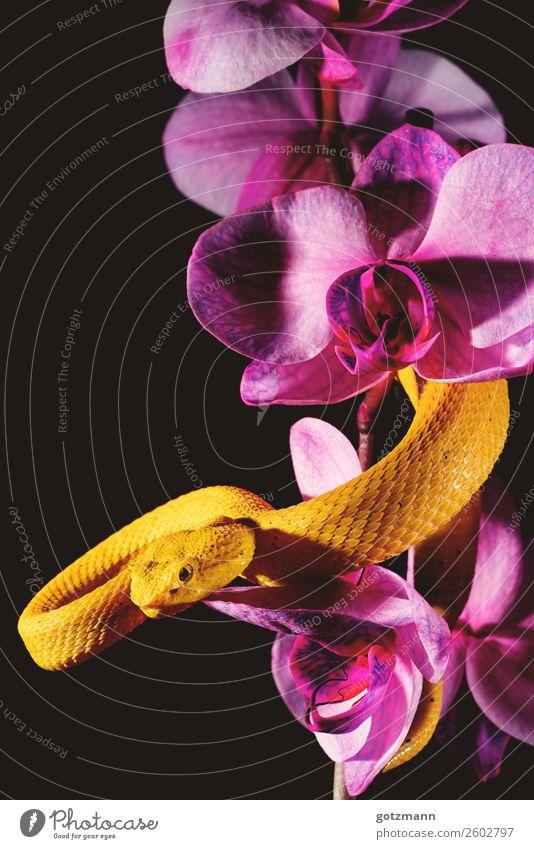 Yellow Power Natur schön Tier gelb Tod springen Wildtier verrückt warten Geschwindigkeit beobachten entdecken festhalten violett stark Wut