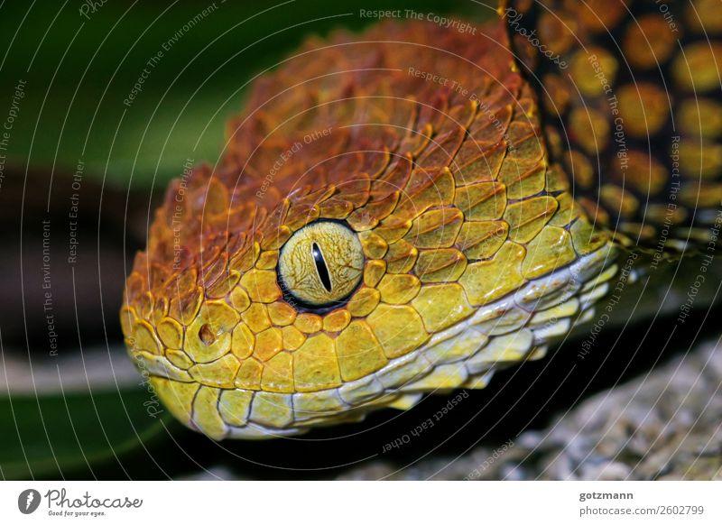 Red and Yellow Natur Tier Wildtier Schlange 1 Arbeit & Erwerbstätigkeit wählen beobachten entdecken fangen Jagd liegen Aggression ästhetisch sportlich