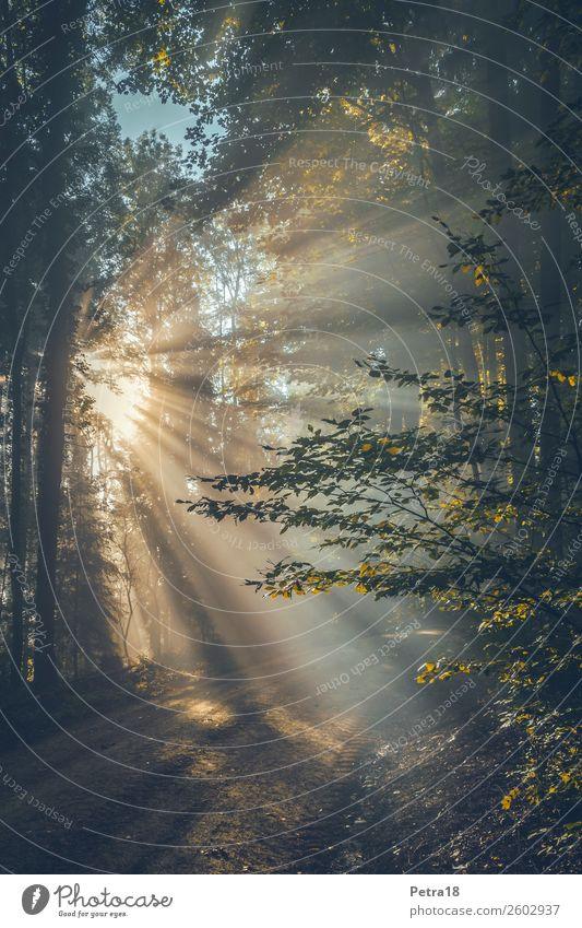 Nebel-Fächer Umwelt Natur Sonnenlicht Herbst Wald Gefühle Stimmung Lebensfreude Warmherzigkeit träumen Farbfoto Außenaufnahme Menschenleer Morgen Schatten