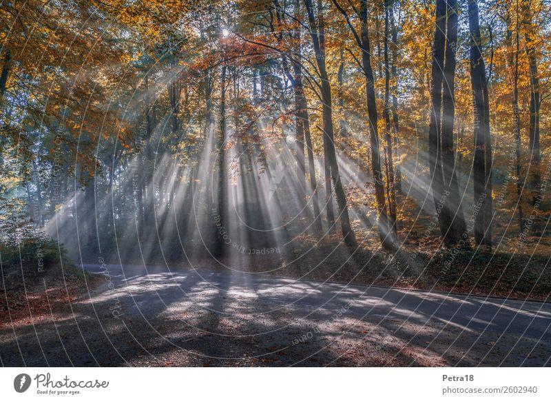Nebel-Fächer Natur Pflanze Urelemente Wetter Wald Gefühle Stimmung Einsamkeit Unsicherheit Beginn geheimnisvoll Farbfoto Außenaufnahme Menschenleer