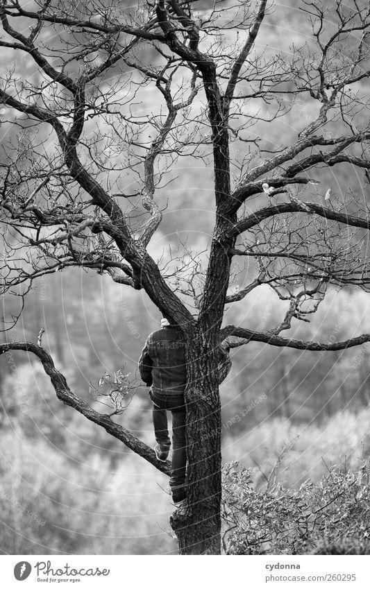 Die Welt von oben Mensch Natur Jugendliche Baum Winter Einsamkeit ruhig Erwachsene Wald Ferne Erholung Umwelt Leben Freiheit träumen elegant