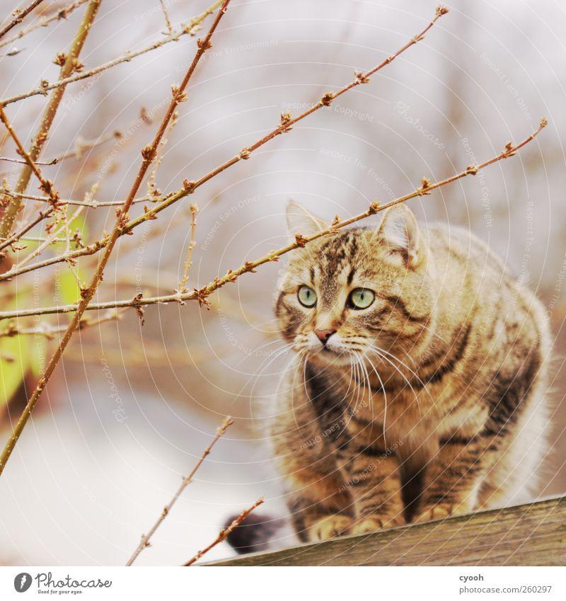 scheue Schönheit Tier Haustier Wildtier Katze Fell 1 dunkel Schüchternheit Angst Misstrauen wild Jagd beobachten Starrer Blick Auge intensiv Flucht schön weich