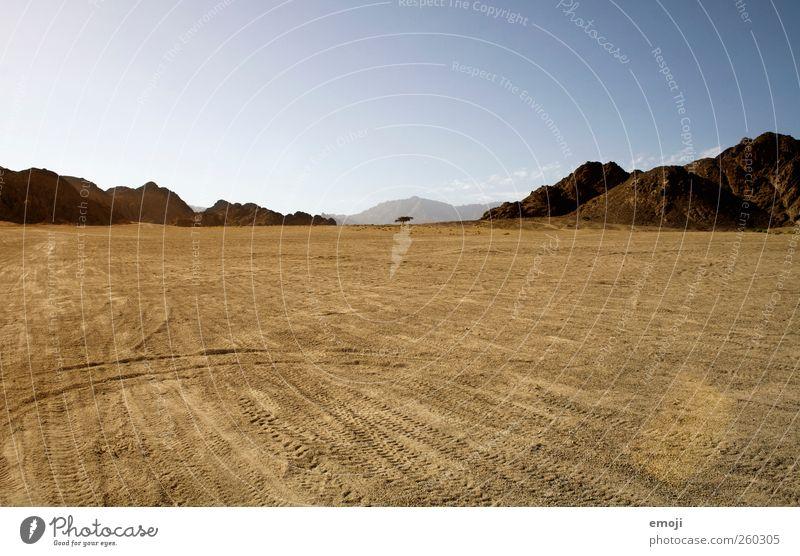 einsamer Baum Umwelt Natur Landschaft Urelemente Erde Sand Himmel Wolkenloser Himmel Klima Wärme Dürre Hügel Felsen Berge u. Gebirge Wüste trocken gelb Farbfoto