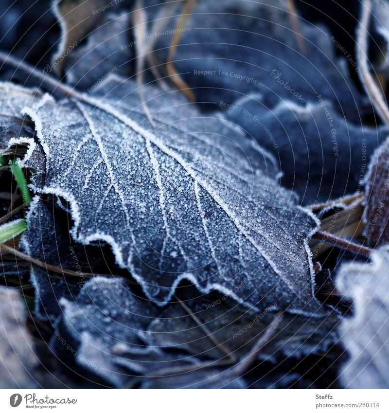 Raufrost Natur blau Einsamkeit Blatt Winter kalt Umwelt Traurigkeit Eis Klima Frost Trauer Jahreszeiten frieren Eiskristall Blattadern