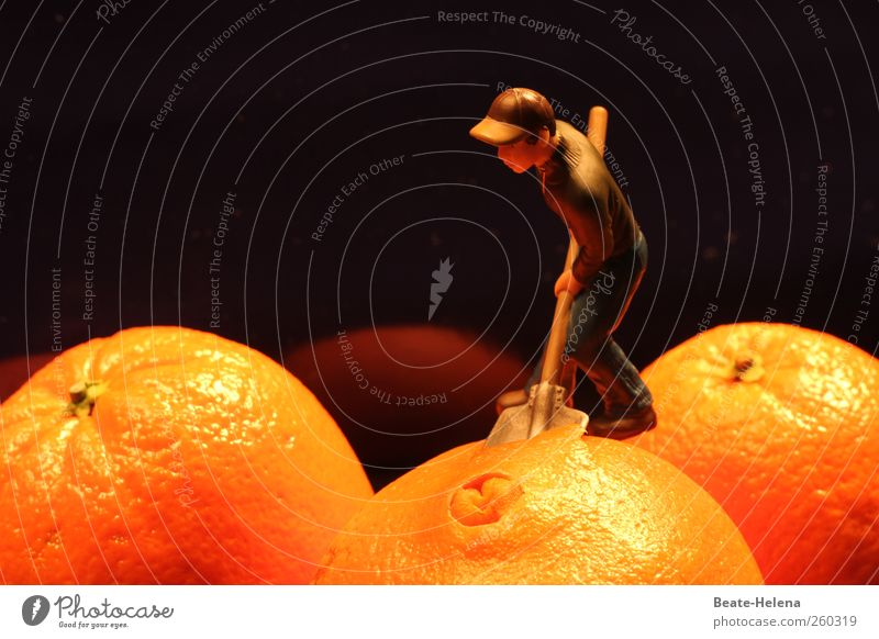Nachtschicht in der Orangenplantage Jugendliche Sonne Junger Mann braun Arbeit & Erwerbstätigkeit Kraft Ernährung Landwirtschaft Bioprodukte anstrengen Vitamin