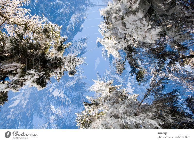 Kalt Natur Baum Winter Umwelt kalt Schnee Ausflug Klima verrückt Perspektive einzigartig Zeichen Schönes Wetter Umweltschutz Wolkenloser Himmel Winterurlaub