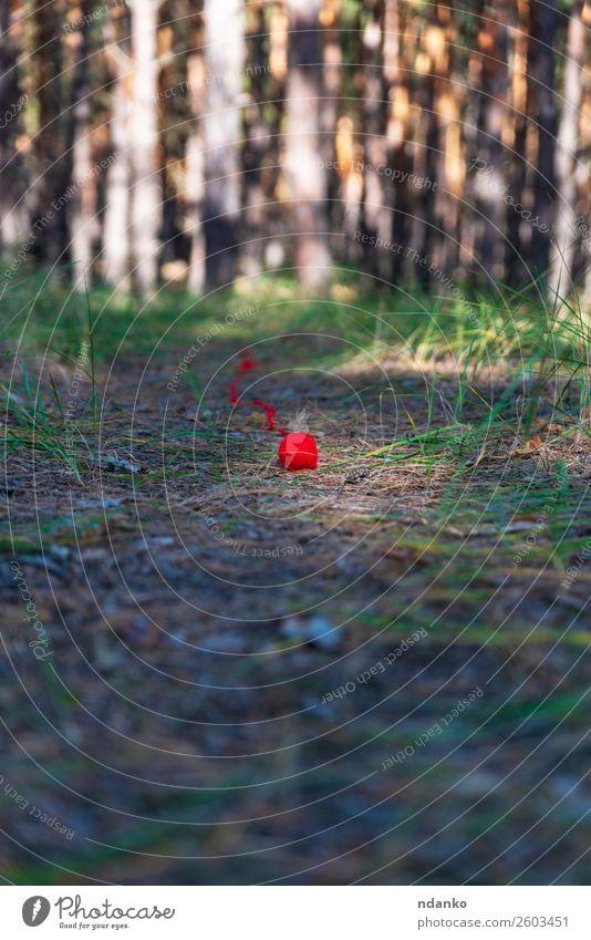 abgewickeltes kleines rotes Wollgarnstück stricken Seil Natur Landschaft Baum Gras Wald Schnur Bewegung grün Stimmung Farbe Ferien & Urlaub & Reisen Idee Faser
