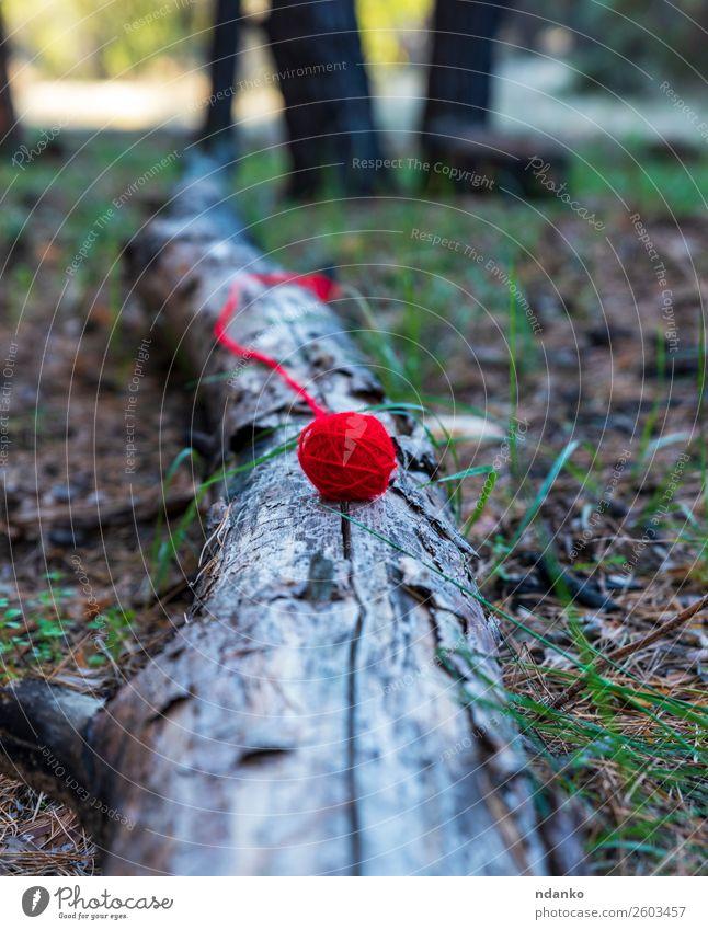 roter Wollball liegt auf einem Baumstamm stricken Handwerk Seil Natur Landschaft Gras Wald liegen schön Gelassenheit Farbe Idee verlieren Faser Garn Ball Wolle