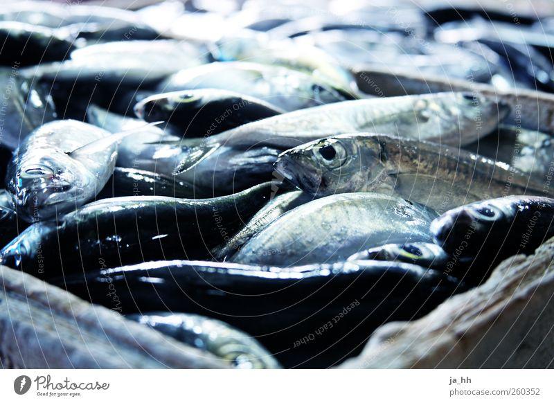 Fisch blau Meer Auge Eis frisch Ernährung kaufen Sauberkeit Kochen & Garen & Backen Angeln Markt silber Mahlzeit Fischereiwirtschaft Angebot