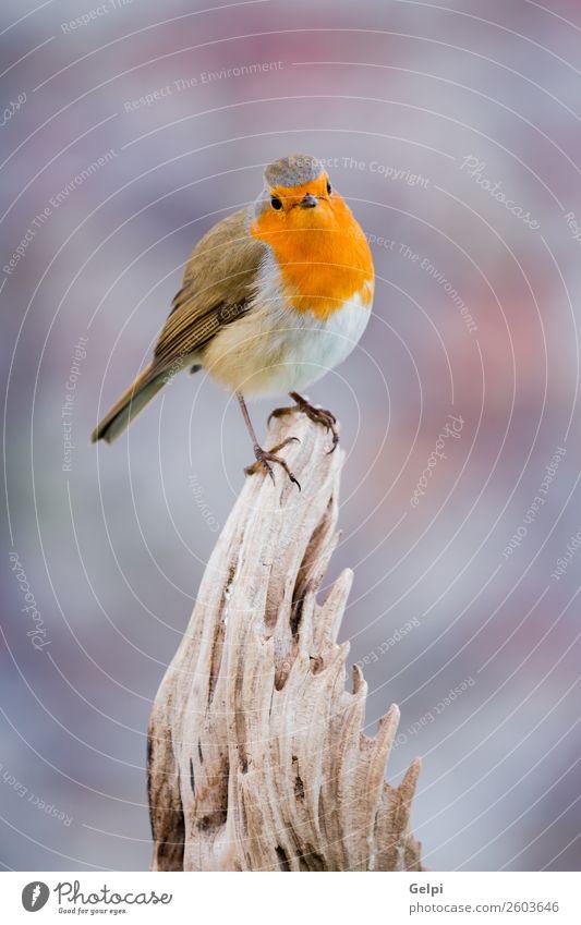 Natur Mann schön grün weiß Tier Erwachsene Leben Umwelt natürlich klein Vogel braun wild Europa Feder