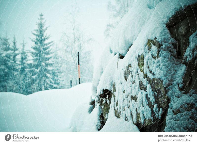 winterliche straßenverhältnisse Landschaft Winter Klima Wetter schlechtes Wetter Unwetter Eis Frost Schnee Schneefall Baum Felsen Alpen Verkehrswege Straße
