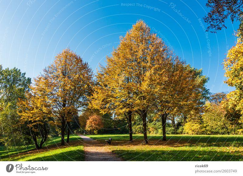 Herbstlich gefärbte Bäume mit blauen Himmel Erholung Ferien & Urlaub & Reisen Tourismus Natur Landschaft Wolkenloser Himmel Wetter Baum Gras Blatt Park