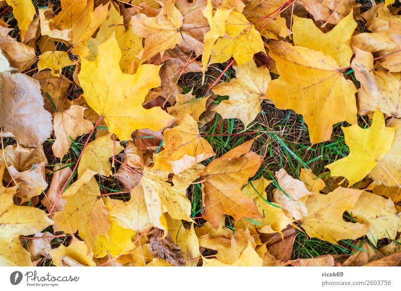 Herbstlich gefärbtes Laub auf dem Boden Erholung Ferien & Urlaub & Reisen Tourismus Natur Landschaft Wetter Blatt Park gelb grün rot Farbe Idylle Klima Umwelt