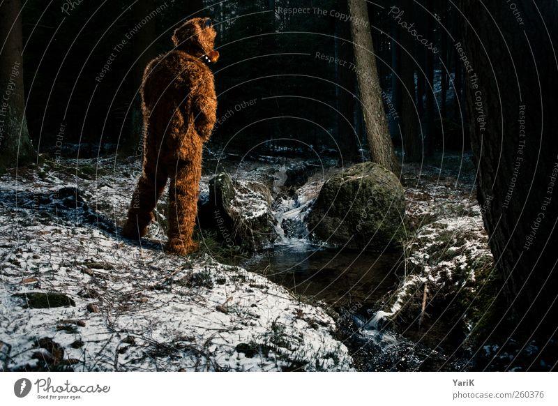 In freier Wildbahn Mensch maskulin Junger Mann Jugendliche Erwachsene Leben 1 Fell brünett Tier Wildtier Bär Bärenfell wild urinieren Wald Natur Baum Bach braun