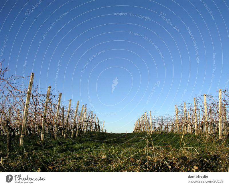 Wohin ? Himmel Herbst Berge u. Gebirge Wein Weinberg