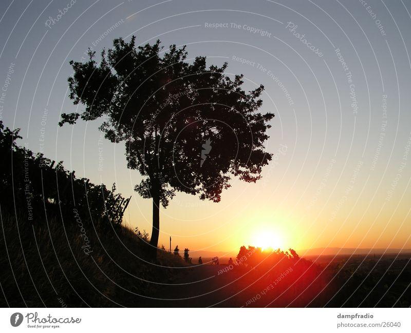 Abendbaum Dämmerung Sonnenuntergang Baum Weinberg Berge u. Gebirge Sundown