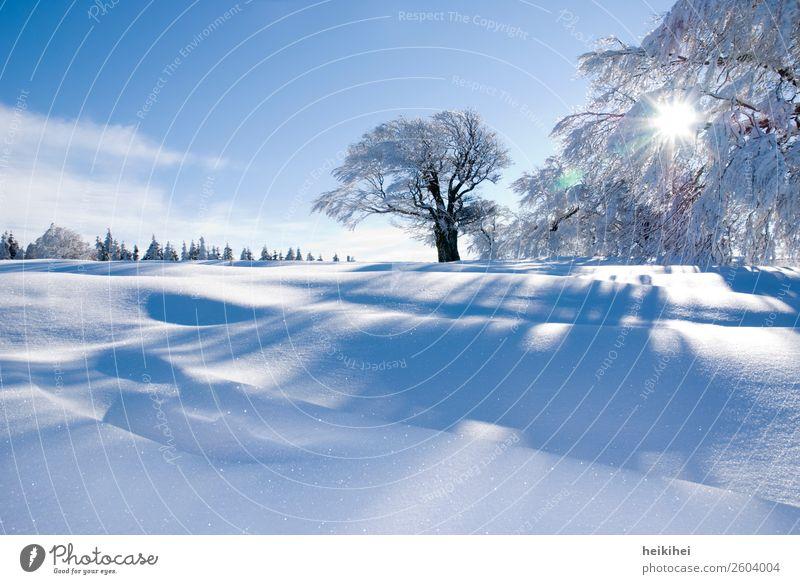 Verschneite Winterlandschaft im Schwarzwald Natur Landschaft Sonne Eis Frost Schnee Baum Feld Erholung frieren Ferien & Urlaub & Reisen wandern fantastisch