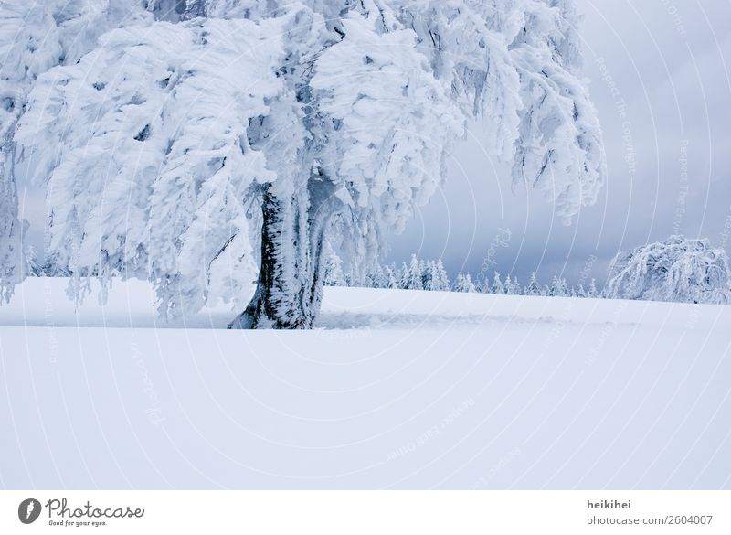 Winter XXL Ferien & Urlaub & Reisen Natur Pflanze blau schön Landschaft weiß Baum Erholung ruhig Ferne Berge u. Gebirge kalt natürlich Schnee