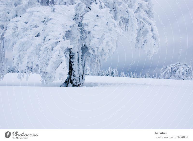 Winter XXL Ferien & Urlaub & Reisen Tourismus Ausflug Abenteuer Ferne Freiheit Schnee Winterurlaub Berge u. Gebirge wandern Natur Landschaft Pflanze Baum Wiese
