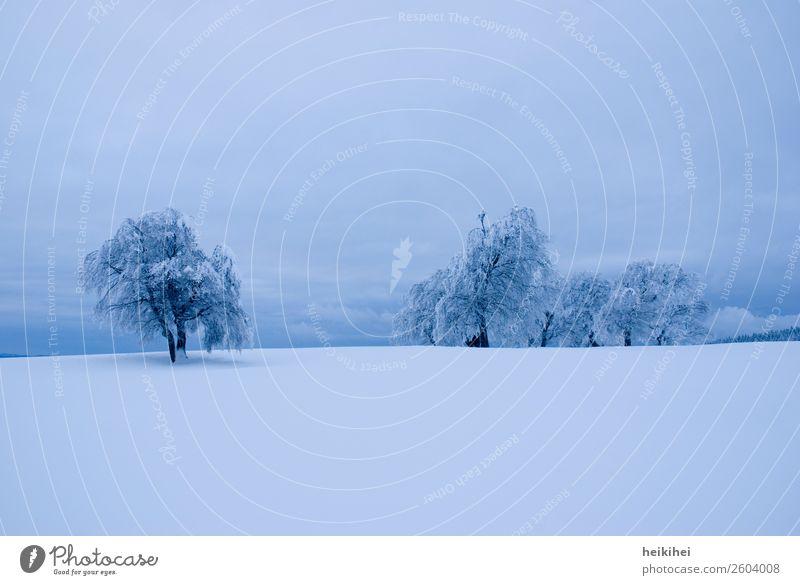 Winter- und Abendstimmung im Schwarzwald Landschaft Natur winter schwarzwald schnee schneedecke kalt Baum Schneelandschaft Frost Außenaufnahme Eis Schneedecke