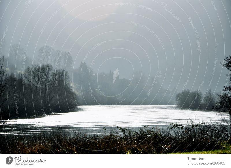Das Leben... Umwelt Natur Landschaft Wasser Himmel Winter Nebel Baum Flussufer Neckar Baden-Württemberg beobachten Blick ästhetisch grau schwarz weiß Gefühle