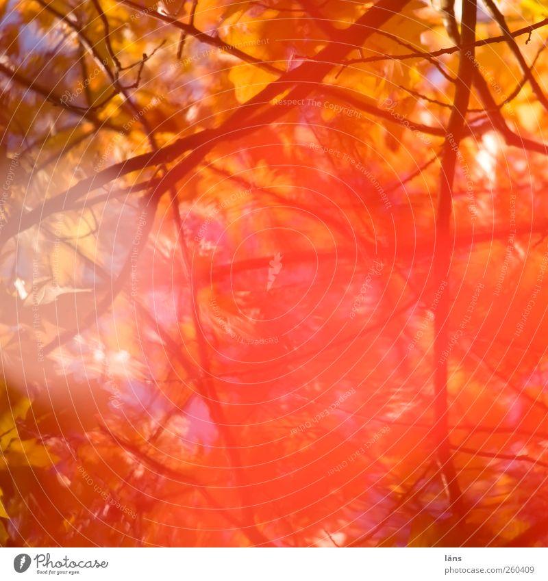 Einblendung II Natur Pflanze Blatt Umwelt Wärme Herbst Vergänglichkeit Wandel & Veränderung schwanger