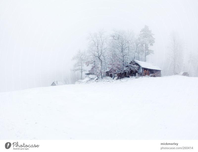 Cold cold Silence ruhig Meditation Winter Schnee Winterurlaub Umwelt Natur Baum beobachten gehen hören Ferien & Urlaub & Reisen ästhetisch kalt weiß Glück