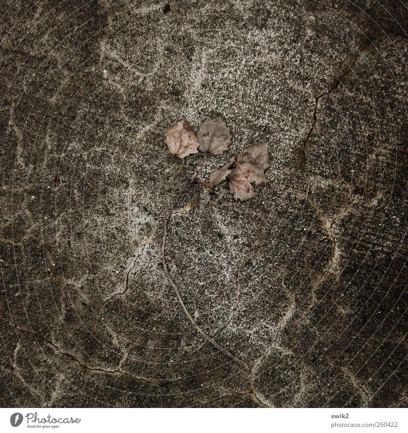 Trauer Natur alt Pflanze Blatt schwarz Umwelt dunkel grau Traurigkeit braun dreckig Beton liegen trist Wandel & Veränderung