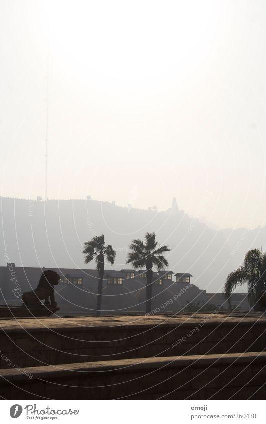 Beschützer über Kairo Himmel Baum Pflanze Haus Mauer Nebel außergewöhnlich Statue Palme Dunst Löwe Smog Stadtrand