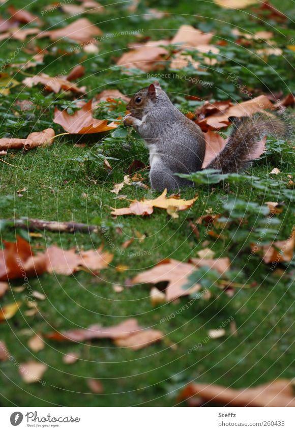 Frühstückspause Natur Tier Blatt Wiese Herbst Gras Park Idylle Wildtier Lebewesen festhalten Appetit & Hunger Wachsamkeit Herbstlaub Fressen Pfote