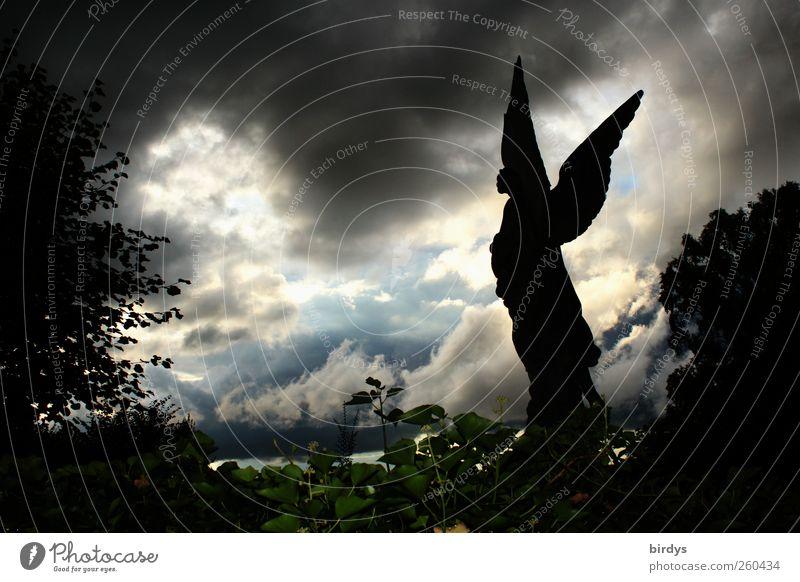 Sie wollen uns glauben machen... Gewitterwolken Pflanze Grünpflanze außergewöhnlich dunkel fantastisch gruselig Stimmung Glaube Trauer Tod Angst Zukunftsangst