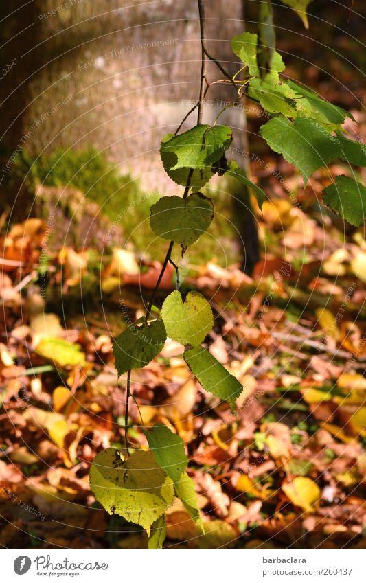 As time goes passing by Natur grün Baum Blatt gelb Umwelt Herbst Wege & Pfade Stimmung Park braun natürlich Wandel & Veränderung Vergänglichkeit viele fallen