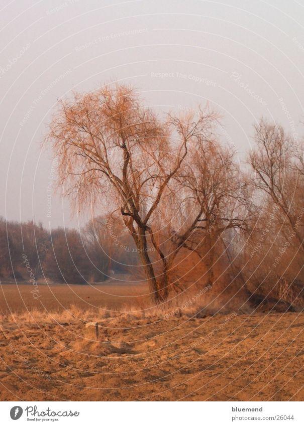 Herbsttag Natur Baum Farbe Landschaft Feld Amerika Ebene