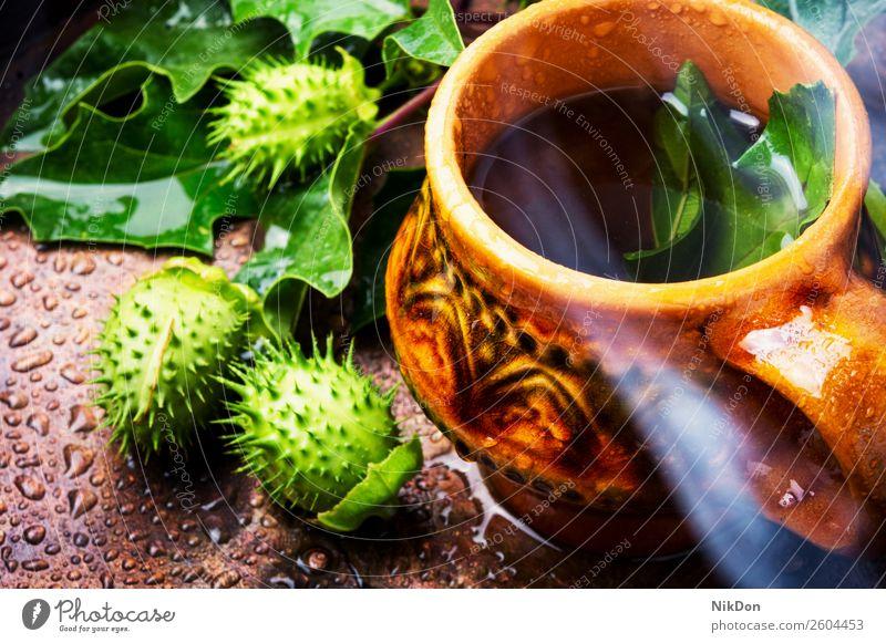 Natürliche Kräutermedizin,Datura Kräutertee Engelstrompete Pflanze stramonium Tee Kräuterbuch Medizin Blume natürlich Natur Abhilfe Teetasse Blatt Gesundheit