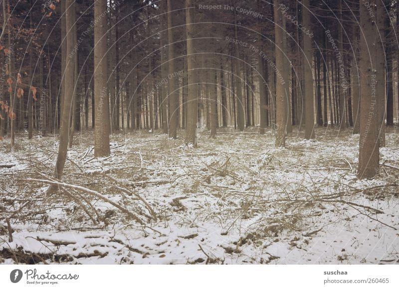 444 Umwelt Natur Landschaft Winter Klima Klimawandel Eis Frost Schnee Wald Holz Baum trist Farbfoto Gedeckte Farben Außenaufnahme Menschenleer Tag