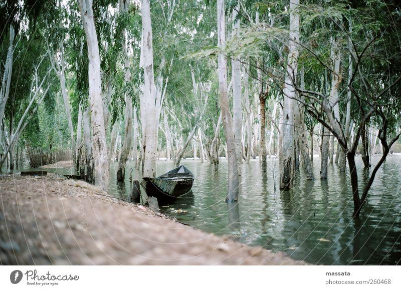 Regenzeit Natur Wasser weiß grün Baum Pflanze ruhig Wald Umwelt Leben Landschaft Wärme hell braun Wetter Erde