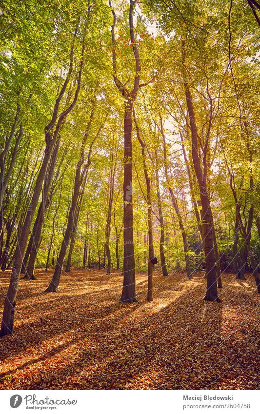 Malerischer Wald bei Sonnenaufgang. schön Ferien & Urlaub & Reisen Tourismus Ausflug Abenteuer Expedition Camping Umwelt Natur Landschaft Pflanze Herbst Baum