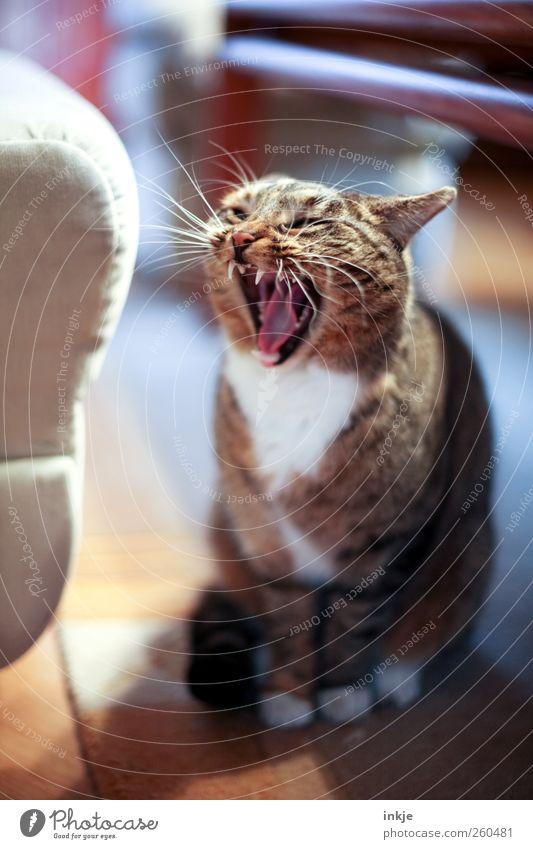 MorGÄÄÄÄÄÄÄHN ! Wohnung Wohnzimmer Tier Haustier Katze 1 hocken sitzen warten Aggression authentisch bedrohlich rebellisch wild Gefühle Stimmung Gelassenheit