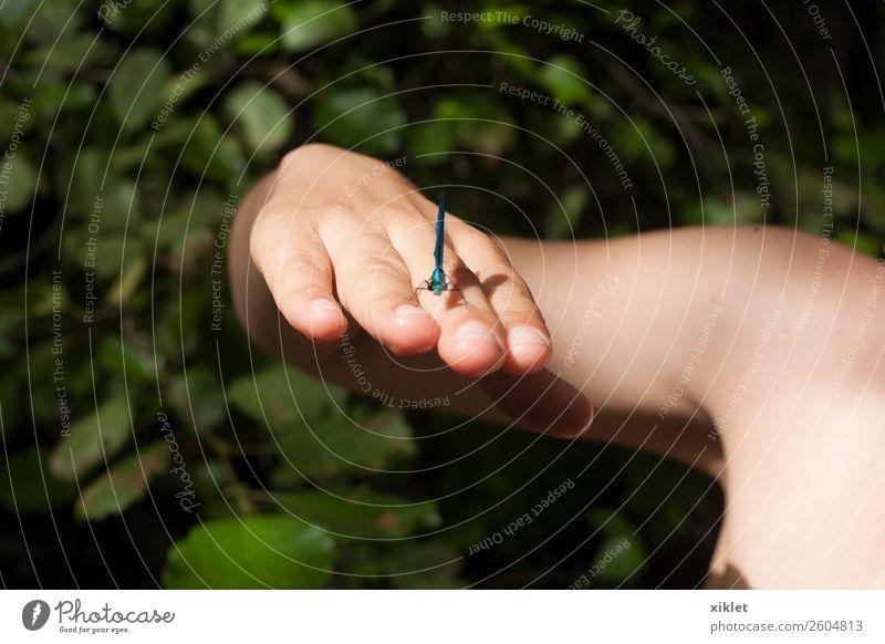 Mensch Natur Sommer blau schön Wasser Landschaft Hand Baum Erholung Tier Gesundheit Freundschaft träumen Fröhlichkeit Haut